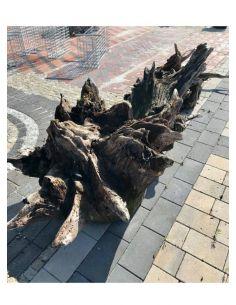 Korzeń dębowy - Stonesgarden.pl®