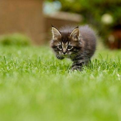 ✔️Rigalit Bamboo Roślinna Ściółka Dla Kotów 2,5 KG✔️- StonesGarden.pl ®