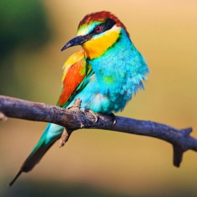 ✅VL-MN 4 Seasons Blend 4kg - Mieszanka Na Cztery Pory Roku Dla Dzikich Ptaków- Stonesgarden.pl®