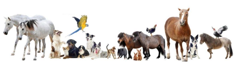 Artykuły dla zwierząt - internetowy sklep zoologiczny - StonesGarden