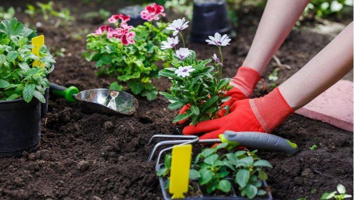 Popraw jakość gleby